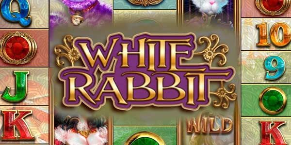 White Rabbit Review